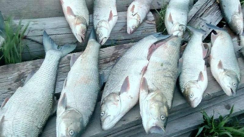 Рыбалка в лабытнанги
